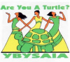 Are you a Turtle?  Female